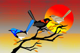 3FairyWrens3