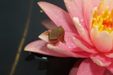 ColoradoWaterLily